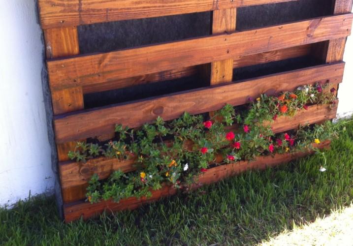 Efetue o plantio das plantas no palete