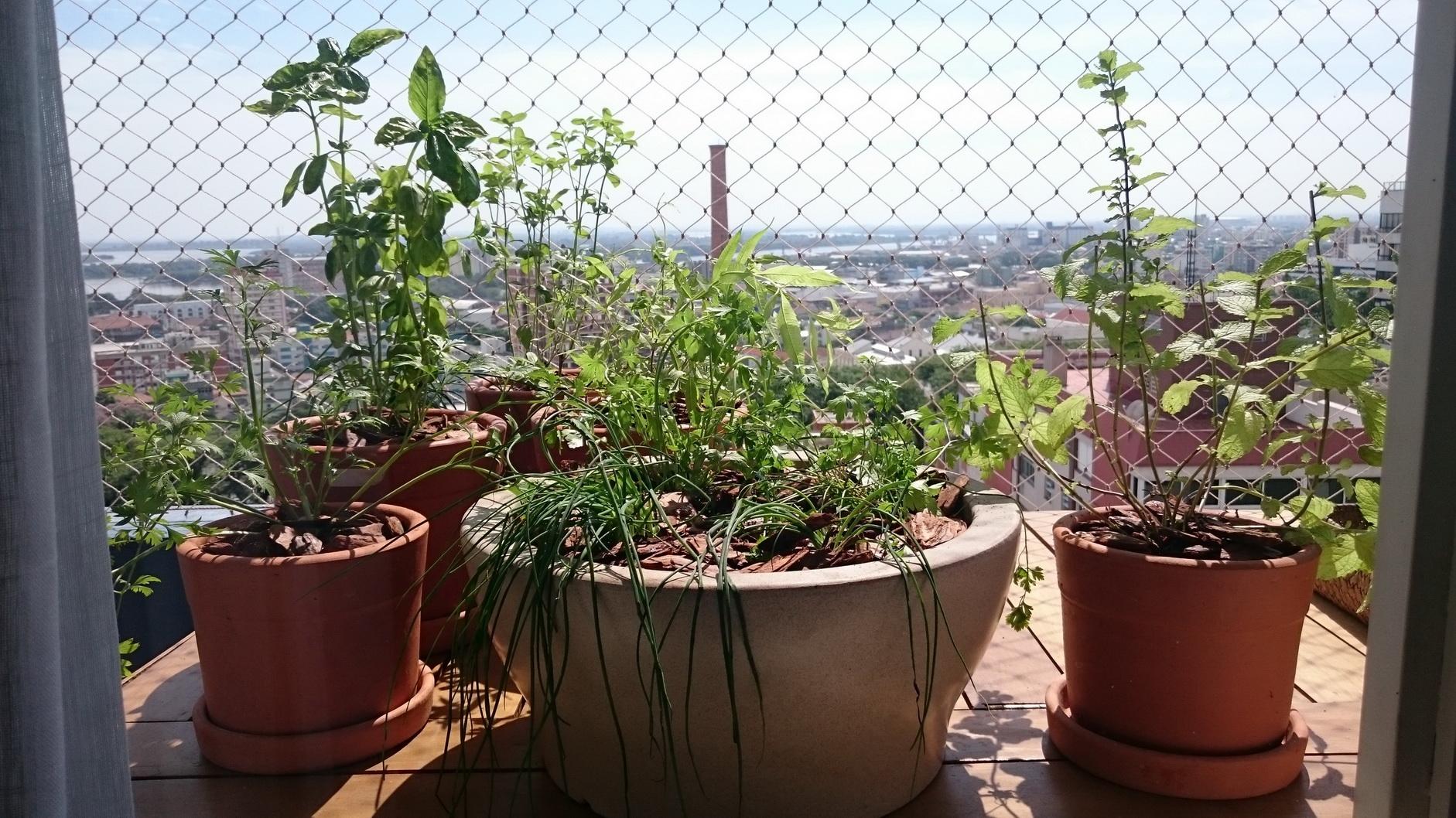 Lugares altos são perfeitos para que as plantas tenham sol frequentemente