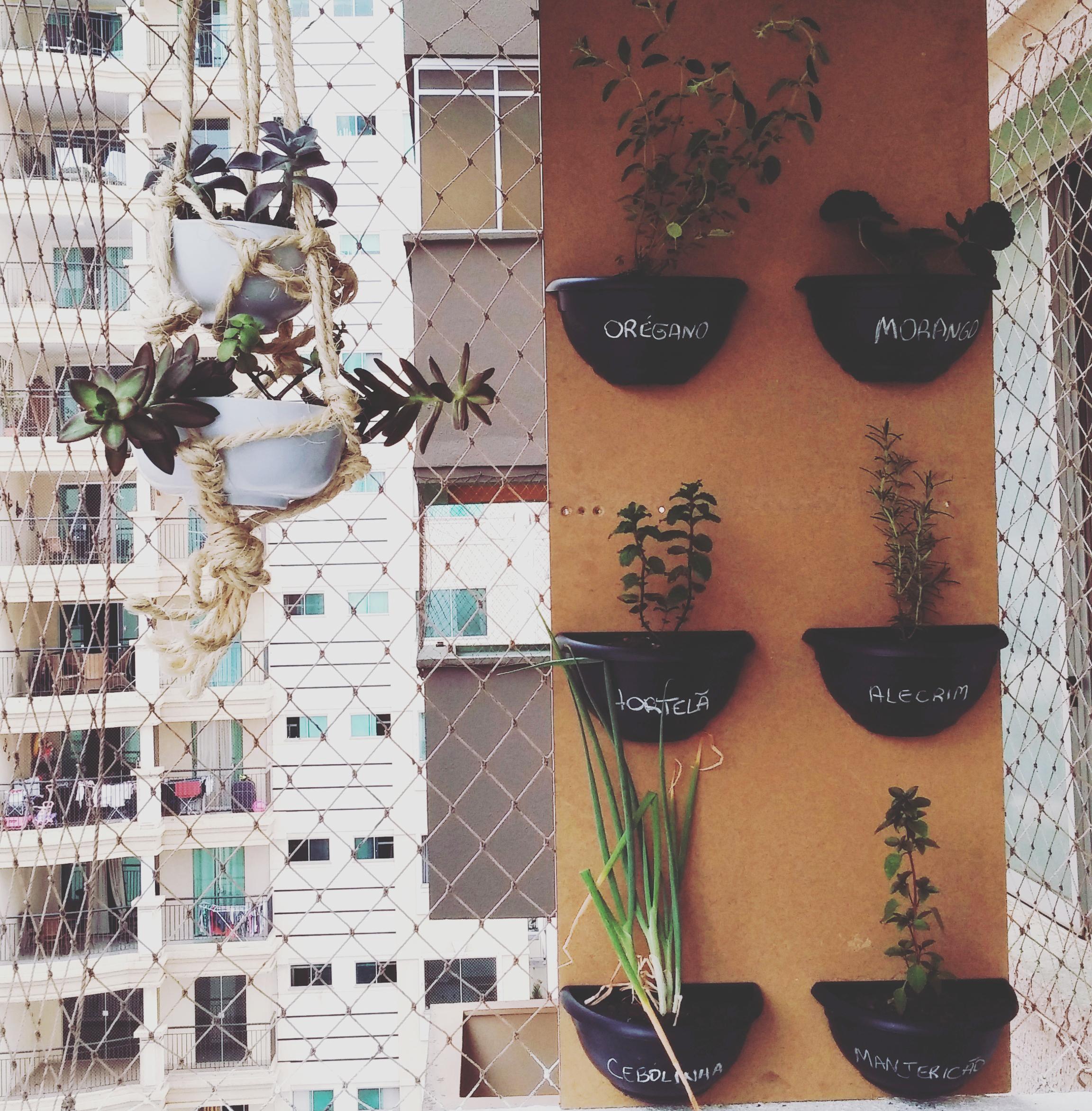 Temperos, plantas para chás e flores são as espécies mais plantadas