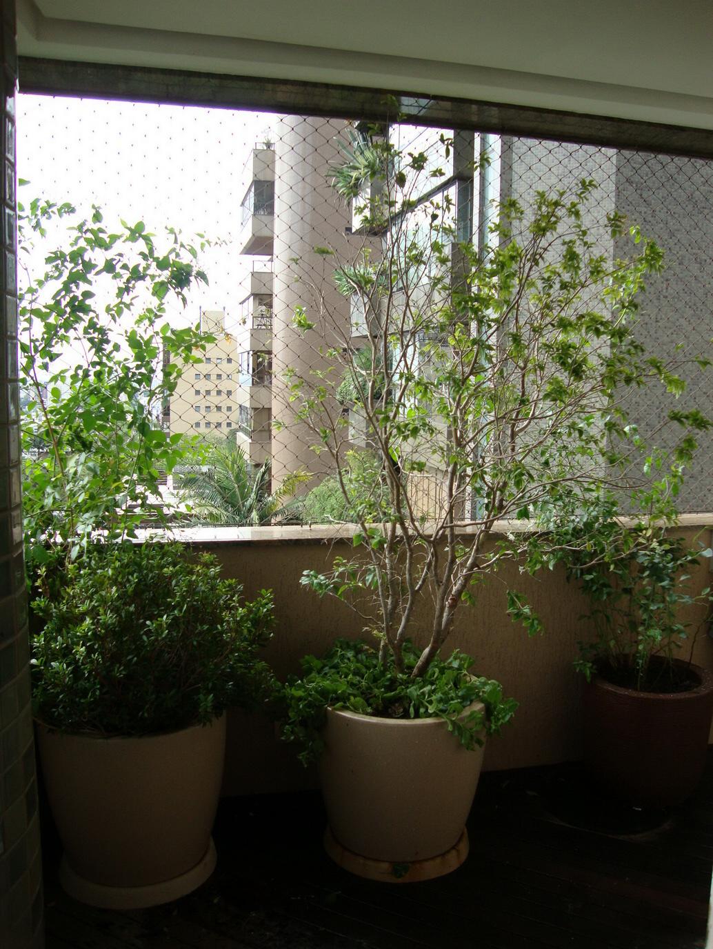 Se você tiver espaço, plantas maiores são uma ótima opção